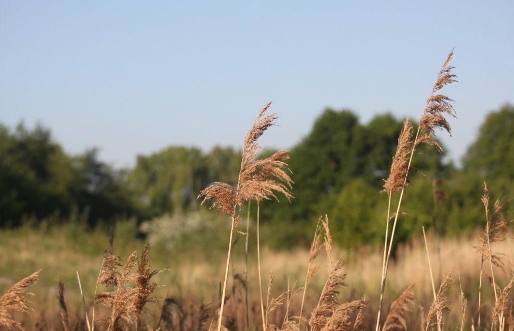 6 tips voor een staycation in Nederland