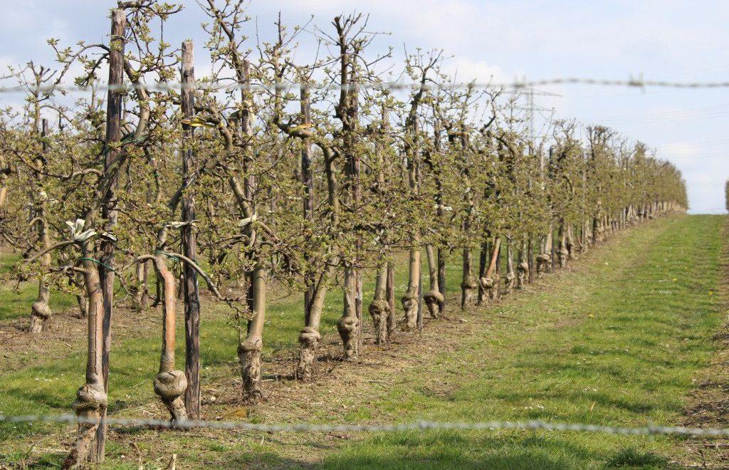 Wijnwandeling Limburg: Route des Vins Winthagen